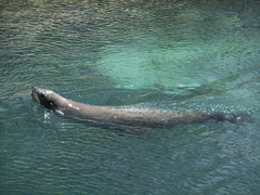 Let's not forget the sea lions who are just as playful as their dolphin counterparts; Blue Lagoon