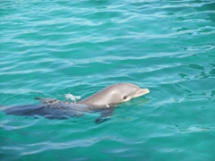 The dolphins were so much fun to watch at Blue Lagoon Island