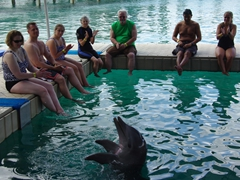 The dolphins at Blue Lagoon are well trained and a joy to behold