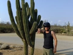Giant cacti abound all over Aruba!