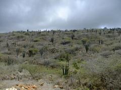 Wild landscape of Arikok National Park
