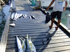 Looks like a successful fishing day (barracuda and mahi-mahi); Oranjestad