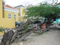 Interesting tree; Punda