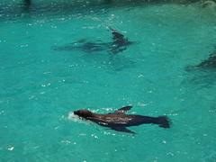 Sea lions playinng around at the Curacao Sea Aquarium