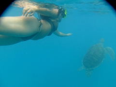 Becky can't get enough of the hawksbill turtles