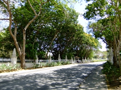 Tree lined road leading towards Payne's Beach