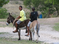 Donkey transport remains a popular alternative on some parts of the island