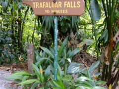 Trafalgar Falls was next on our itinerary...here is an easy footpath leading to the falls