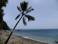 From the beach side it doesn't look too spectacular. However, while underwater, undersea volcanic gasses seep through the ocean floor at Champagne Reef (western shore of Dominica)