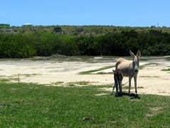 A donkey wistfully wishes it could roam free