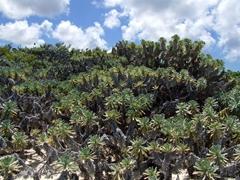 Anguilla is a flat, scrubby isle