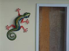 A colorful Anguillan gecko souvenir