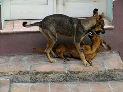Dogs playfully nipping each other