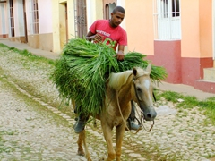 A young man struggles to keep his bundle of grass atop his horse