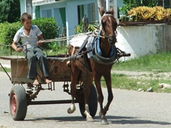 A young boy controls his horse and cart with care and determination; outskirts of Manaca Iznaga Plantation