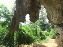 Elephant trunk formation; Topes de Collantes