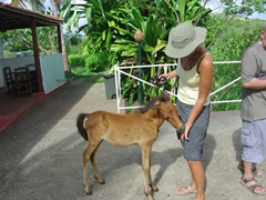 A baby horse begs for food; lookout point at Valle de los Ingenios