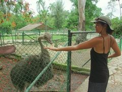 Becky cautiously tries to feed an ostrich some food, finding out in the process how poor their eyesight is!
