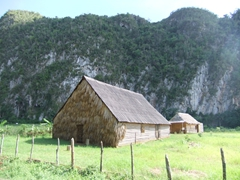 Traditional tobacco drying shacks dot the Vinales countryside