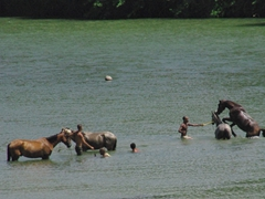 Horses and their owners cooling off in a river