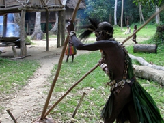 Village man demonstrates how to open a sago tree and harvest the pulp