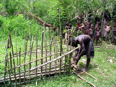 Demonstration of how to build a pig trap in the jungle