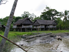 Stilt houses of a typical Sepik area village