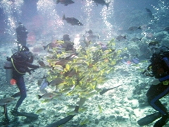Luke and Robby swarmed by fish; Moorea