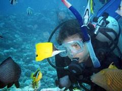 Triggerfish, yellow longnose butterflyfish, clownfish and angelfish...diving in Tahiti is fantastic!