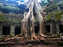 Banyan tree at Ta Phrom