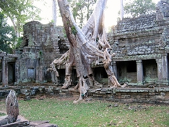 Tree roots intertwined with Preah Kahn Temple