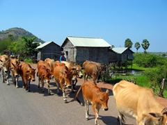 Cambodian style traffic jam
