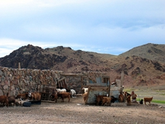 Goats are overtaking this family's abode; near Saikhan Ovoo Wild Ger Camp