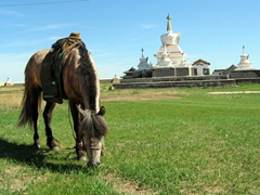 "A horse grazes with the ""Golden Stupa"" of Erdene Zuu in the background"