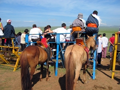 "Horses ""parked"" while their owners await the outcome of the horse race; Naadam Festival"