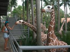 Becky petting a giraffe; Nong Nooch