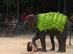 "A brave volunteer gets an ""elephant massage"""