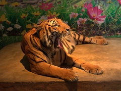 Tigers are available for portraits with tourists willing to pay; Nong Nooch Garden