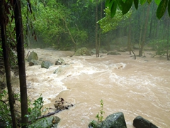 Because of the day's earlier torrential rain, the pool at the base of Na Muang 1 Waterfall was not swimmable; Ko Samui