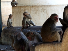 Monkeys entertaining visitors to Mt Popo