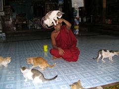 Talented felines make leaping through a hoop look easy; Jumping Cats Monastery, Inle Lake
