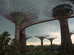 View of the supertrees that range from 25 to 50 meters at Gardens by the Bay