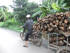 An overburdened honda attempts to haul a heavy load of wood
