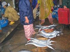 Massive swordfish for sale; Hoi An fish market