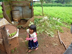 An ethnic minority Co Ho girl scampers off after collecting guava fruit; Lat Village (Chicken Village)