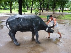 Luke stopping a water buffalo dead in its tracks; Rizal Park