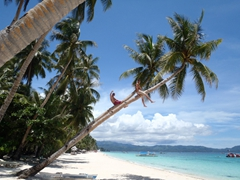 Robby and Luke climb up coconut trees; Boracay