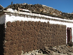 Yak dung discs drying on the walls of this house. The residents later use the dung as fuel