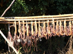 Strips of bacon and whole duck are strung up to dry in the sun; Yangshuo
