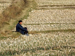 Meanwhile, another farmer takes a break and enjoys the warm rays of the fading sun